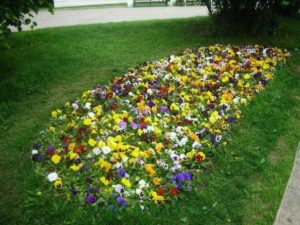 цветок верности