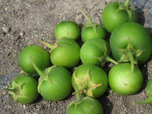 zelenye-yagody-kartofelya