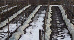 чем укрыть виноград на зиму