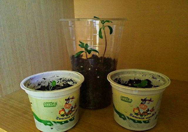 Емкости из пластиковых стаканчиков