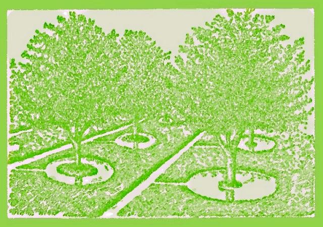 Способы полива деревьев осенью